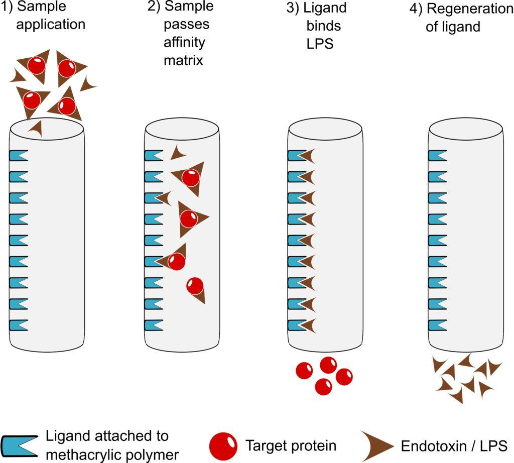 EndoTrap endotoxin removal principle